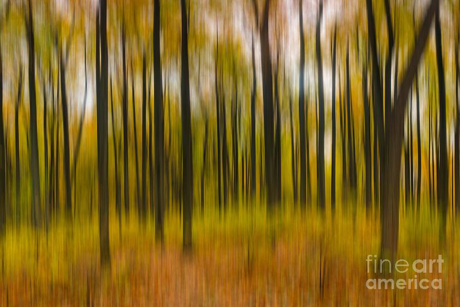 Abstract Autumn Photograph