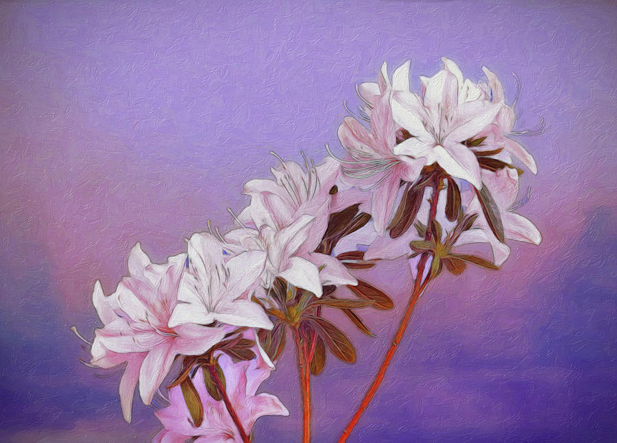 Rhododendron Photograph - Abstract Azaleas by Tom Mc Nemar