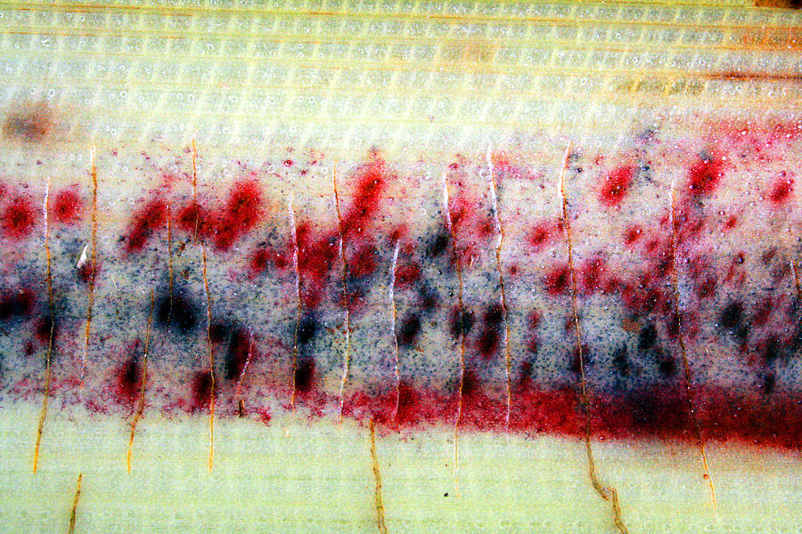 Abstract Banana Trunk 3 Photograph by Jennifer Bright