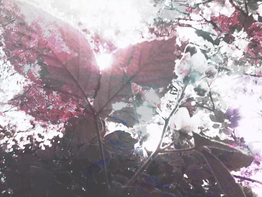 Botanical Photograph - Abstract Botanical Art Raspberry Leaf Sunset,  by Itsonlythemoon -