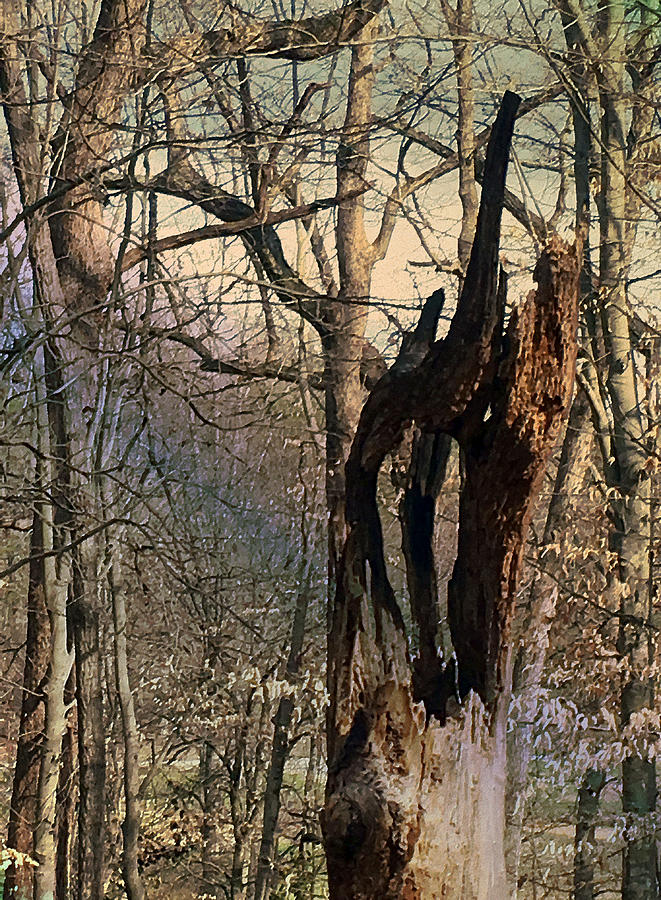 Abstract Dead Tree by Robert G Kernodle