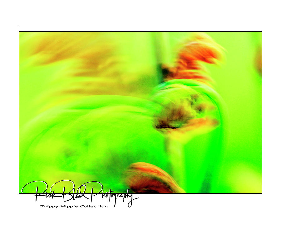Abstract Fauna #1 Photograph