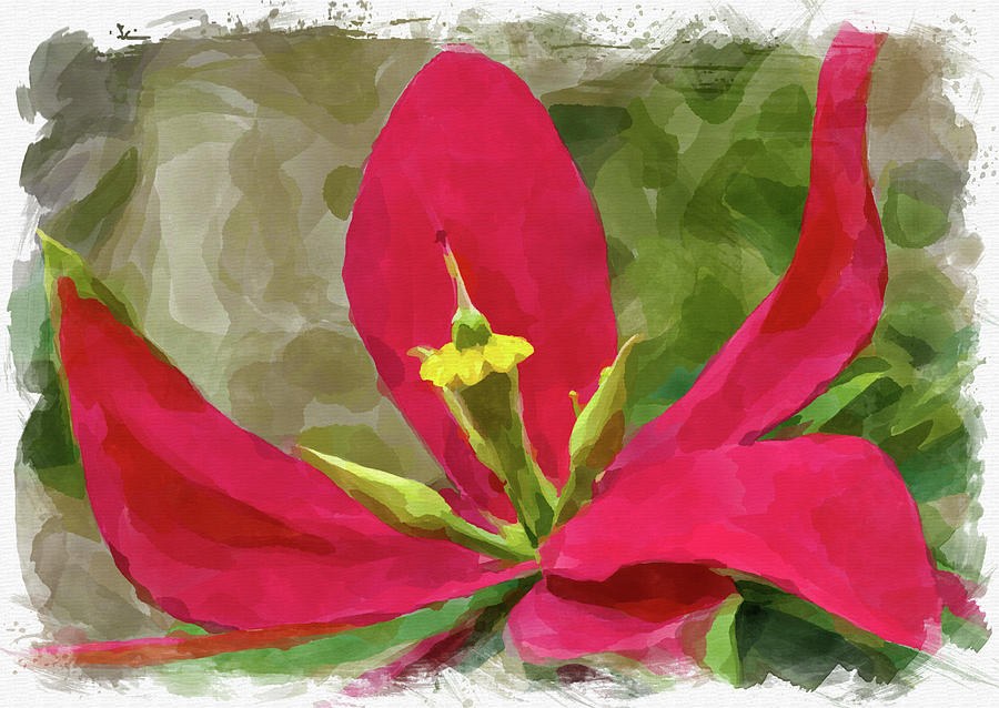 Abstract Flower Watercolor IIi Photograph