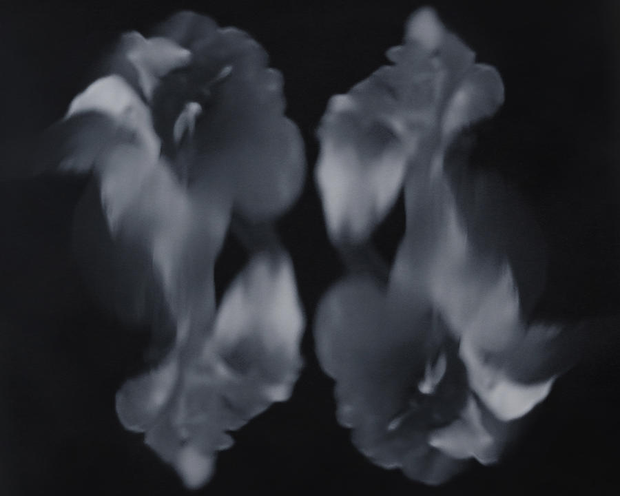 Black And White Photograph - Abstract Flowers by Scott Wyatt