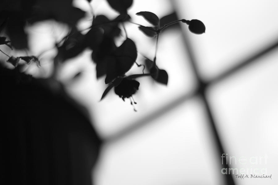 Flower Photograph - Abstract Flowers by Todd A Blanchard