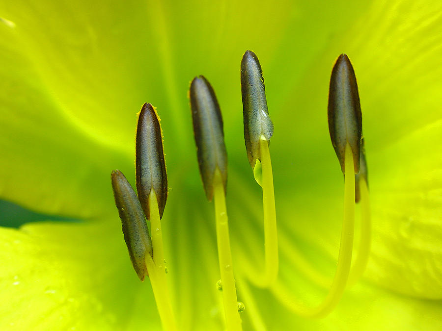 Spring Photograph - Abstract Lily Flower by Juergen Roth