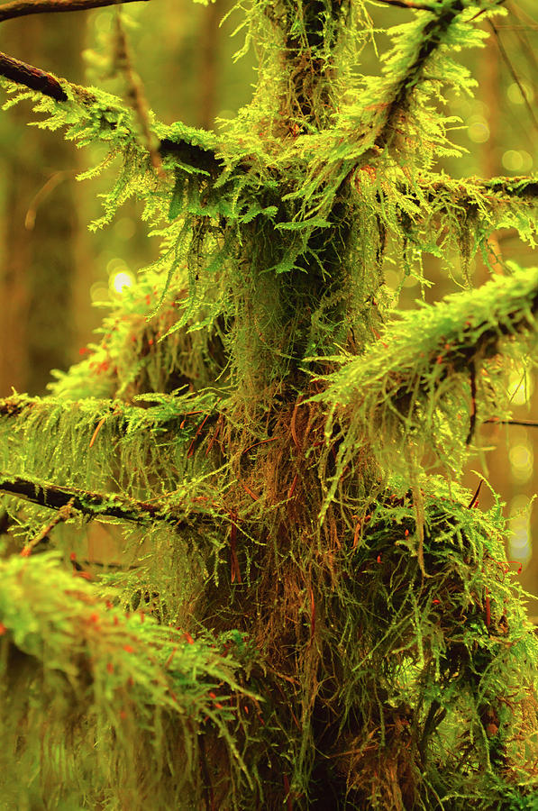 Abstract Mossy Branch by Tikvah's Hope