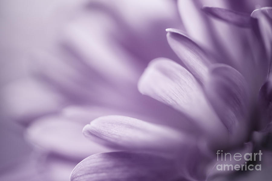 Abstract Of Flower Petals Photograph