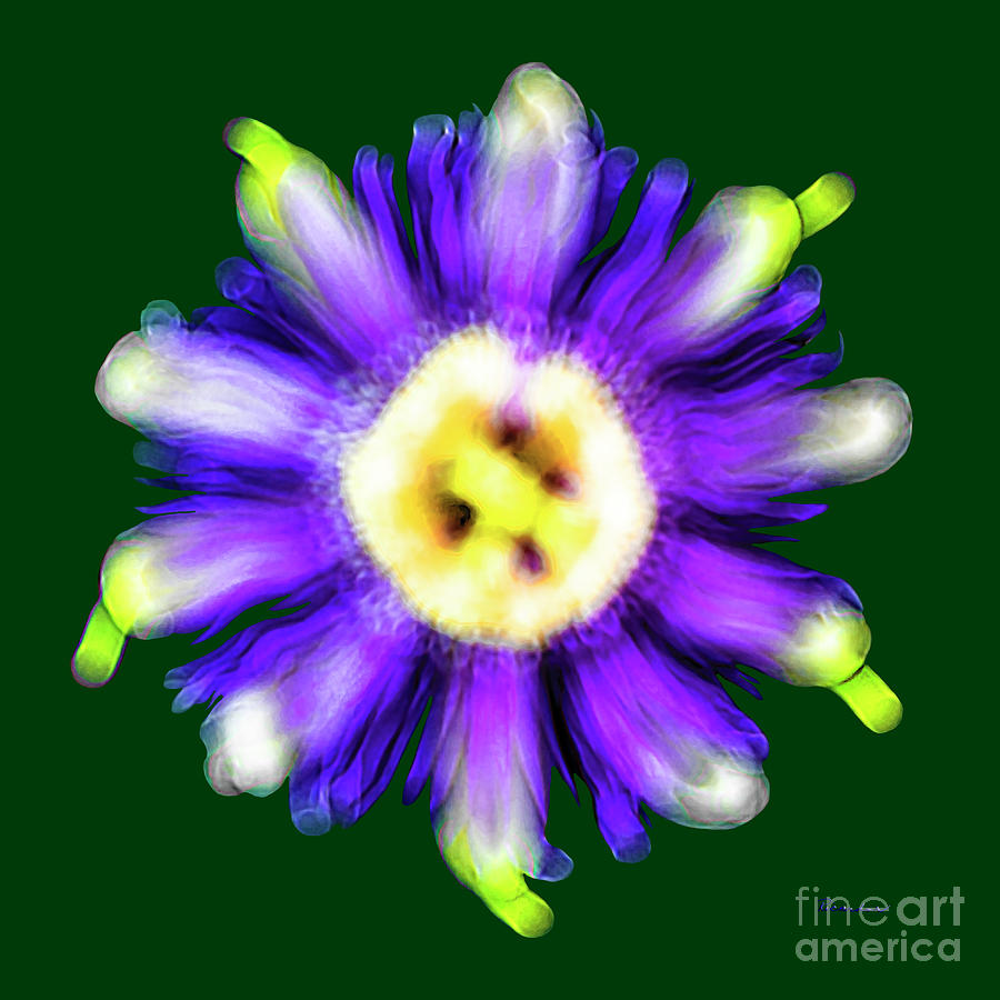 Abstract Photograph - Abstract Passion Flower In Violet Blue And Green 002g by Ricardos Creations