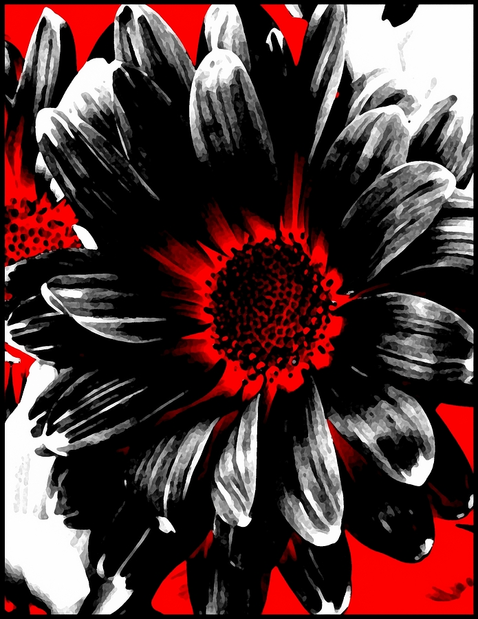 Abstract red white and black daisy photograph by angelina - Black red and white kitchen designs ...