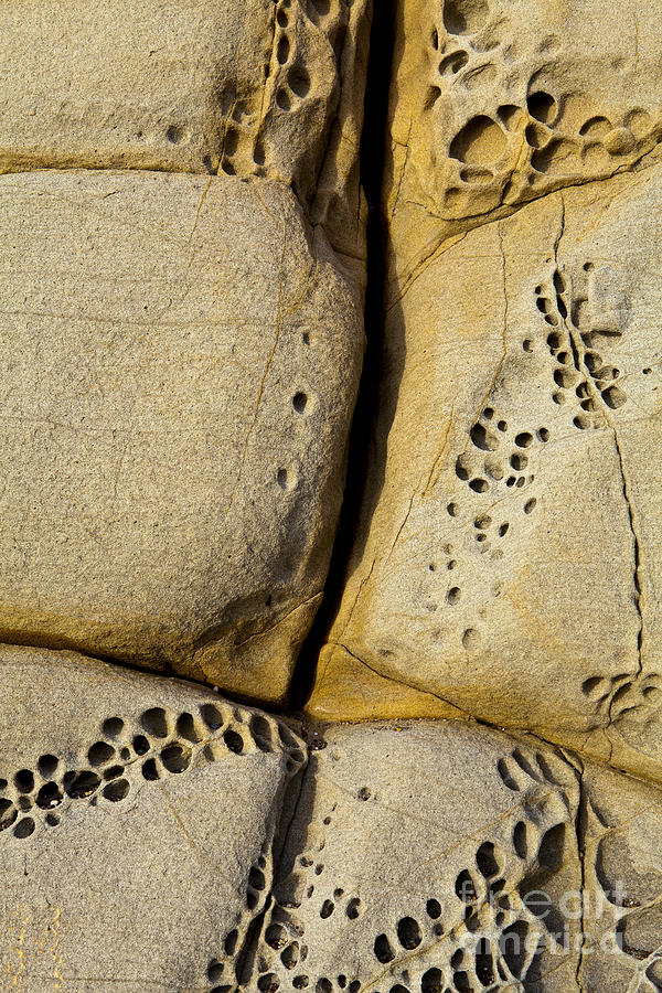 Rock Photograph - Abstract Rock Pocked With Holes And Divided By Lines by Sharon Foelz