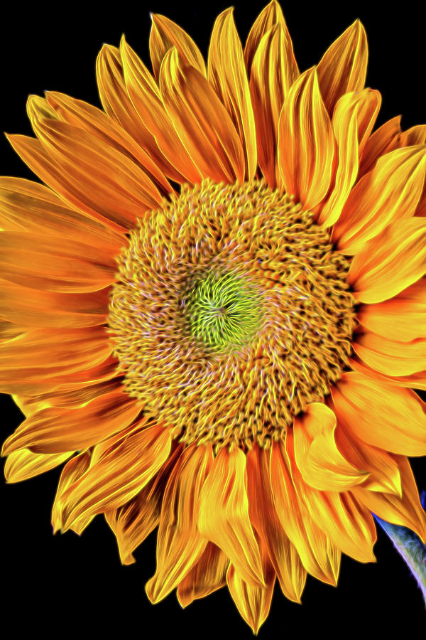 Mood Photograph - Abstract Sunflower by Garry Gay