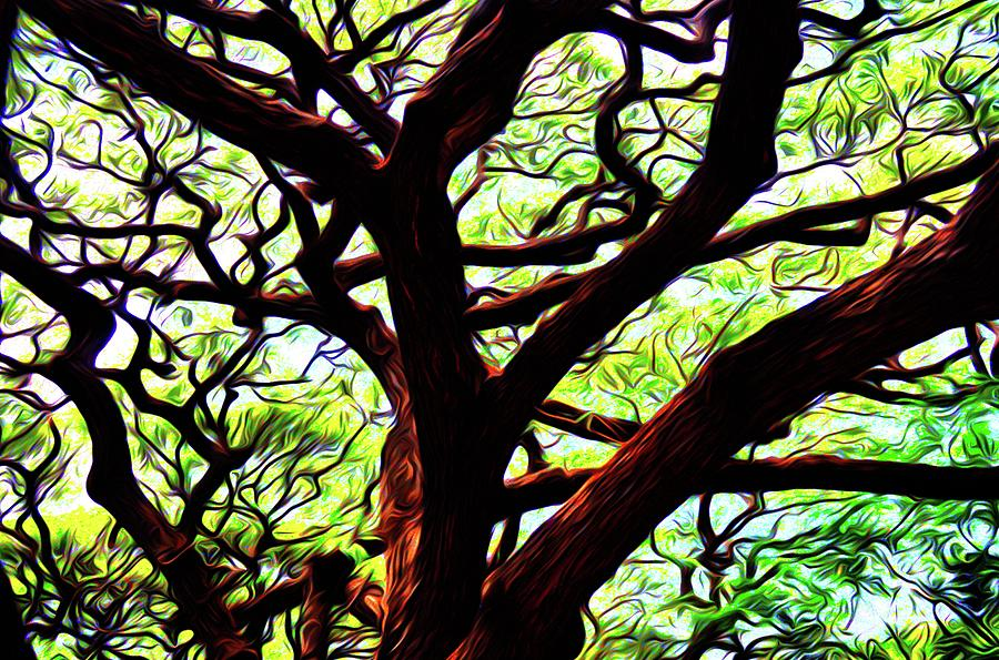 Abstract Tree 50 Photograph
