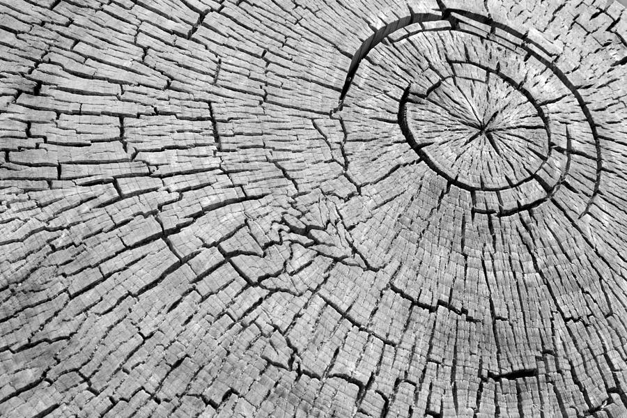 Trees Photograph - Abstract Tree Cut by James BO Insogna