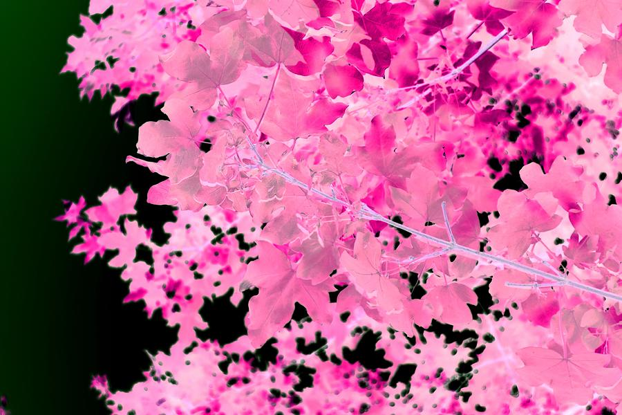 Pink Photograph - Pretty Pink Leaves by Itsonlythemoon