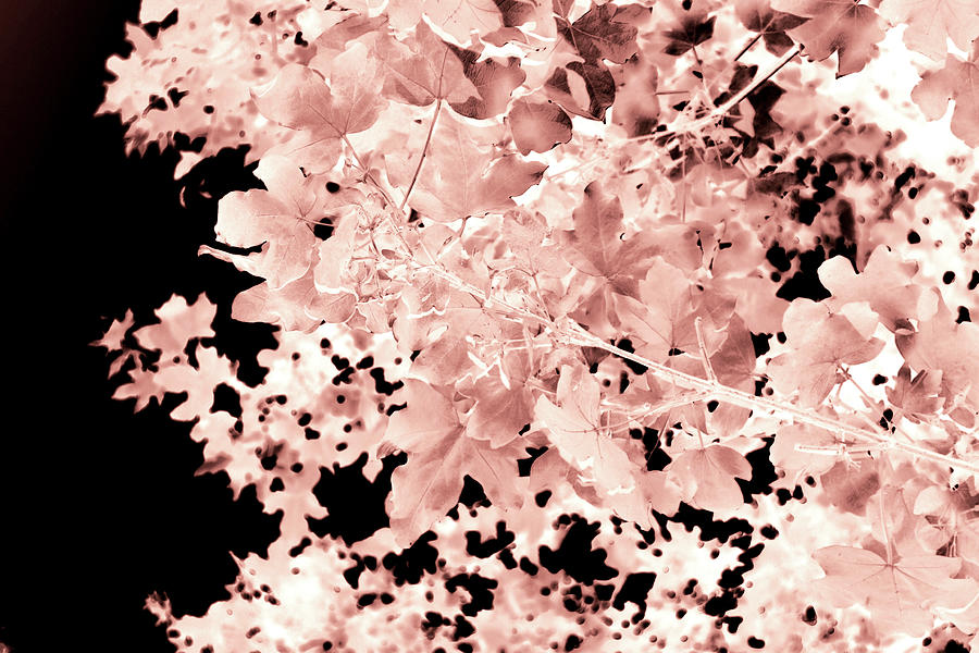 Leaves Photograph - Autumnal Leaves by Itsonlythemoon -