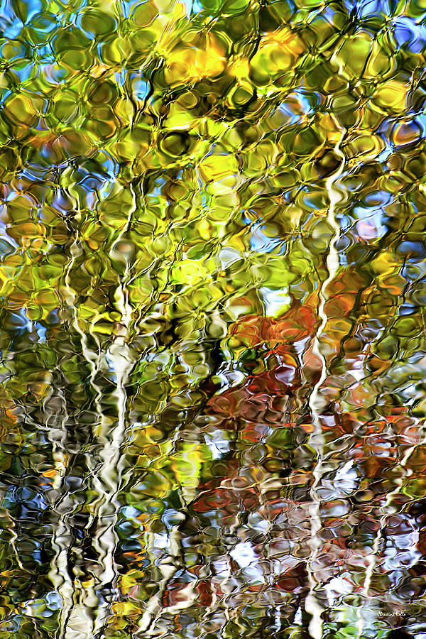 Abstract Photograph - Abstract Tree Reflection by Christina Rollo