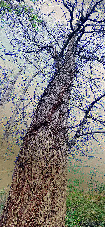 Abstract Tree Trunk by Robert G Kernodle