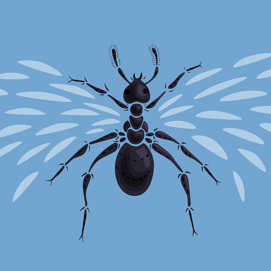 Ant Digital Art - Abstract Winged Ant by Boriana Giormova