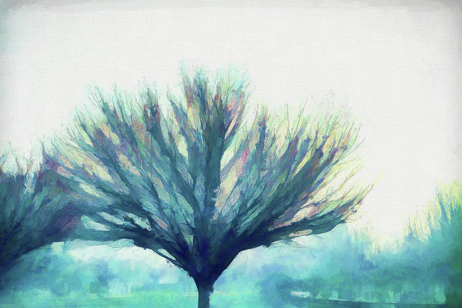 Abstract Nature Winter Art Trees Blue
