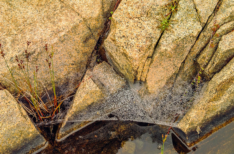 Granite Photograph - Acadia Granite With Spiderweb And Grasshopper Photo by Peter J Sucy
