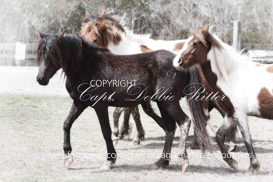 Chincoteague Pony Photograph - Ace and Girls by Captain Debbie Ritter
