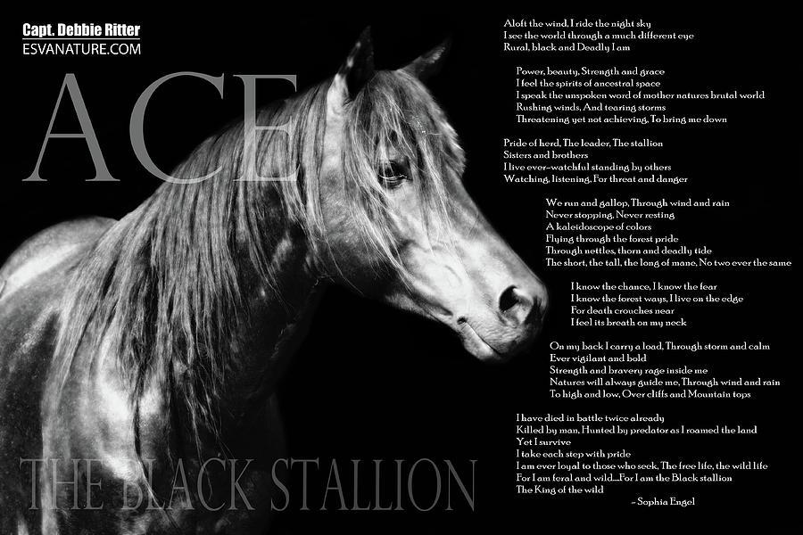 Wild Stallion Photograph - Ace Poem 3390 by Captain Debbie Ritter