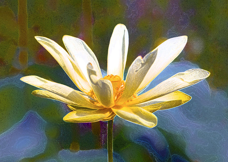 Achievement Of Enlightenment The Golden Lotus Photograph By