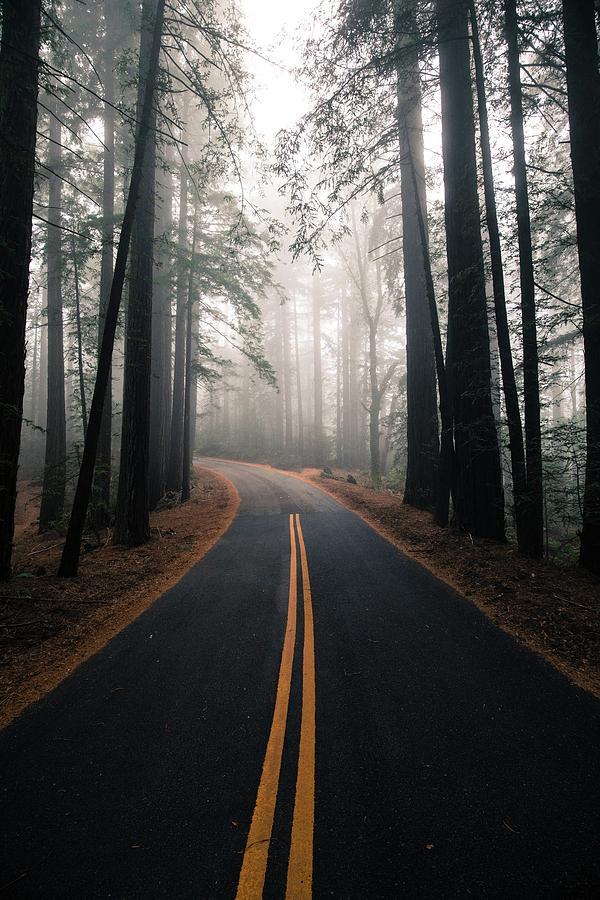 Mount Tamalpais Photograph - Across the forest by Matthew Ronder-Seid
