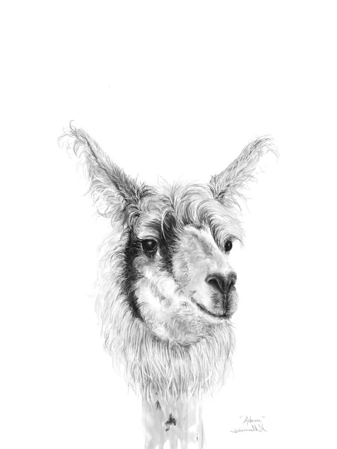 Llamas Drawing - Adam by K Llamas