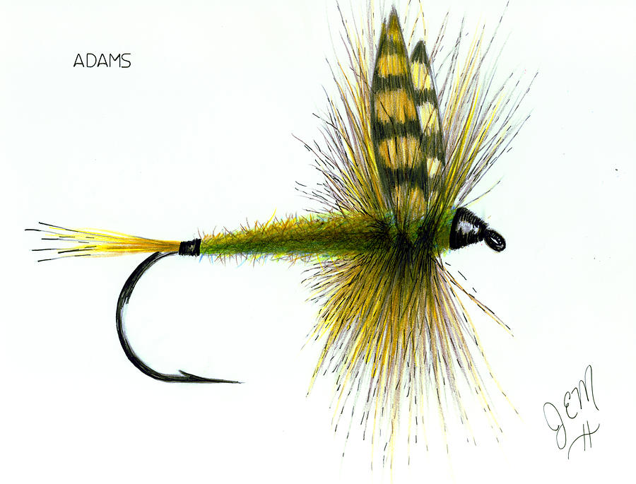 Fly Fishing Drawing - Adams by James Eugene  Moore