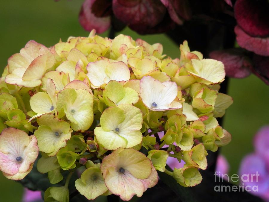 Summer Garden Photograph - Adeles Entourage by L Cecka