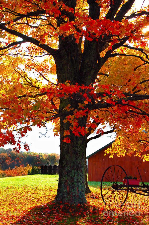 Berry Photograph - Adirondack Color Show by Diane E Berry