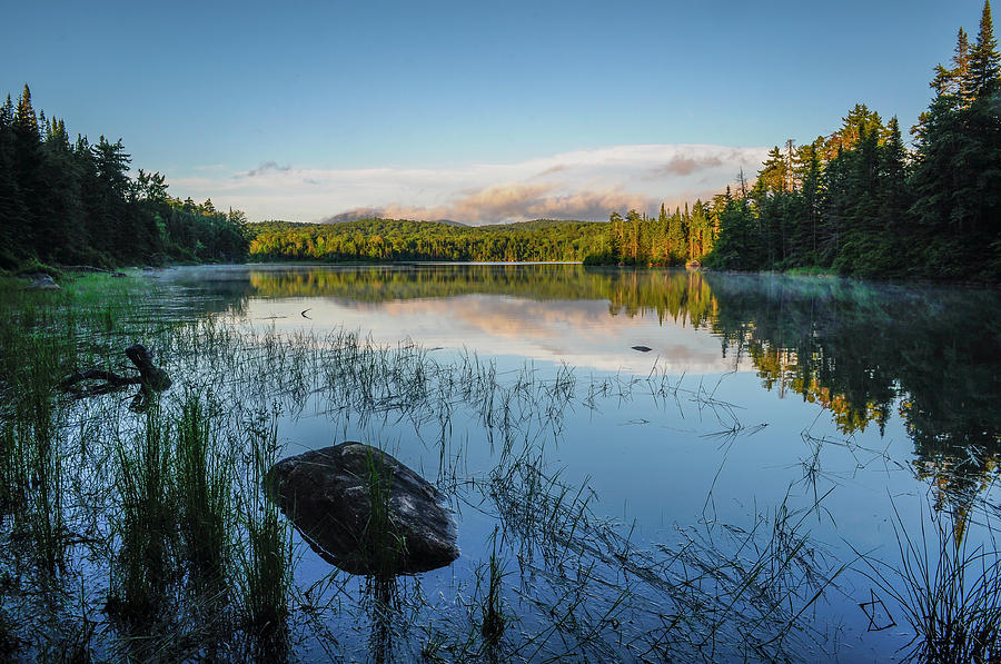 Adirondack Wild by Bob Grabowski