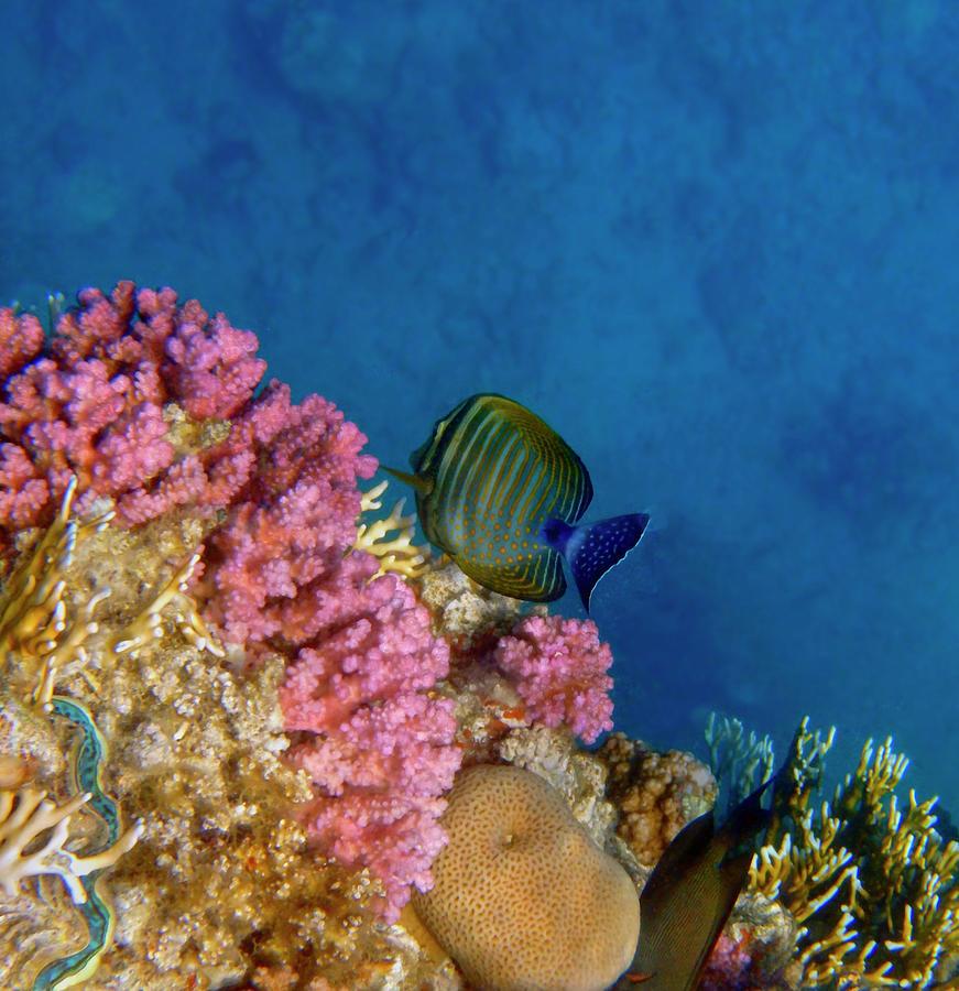 Adorable And Beautiful Red Sea 2 by Johanna Hurmerinta
