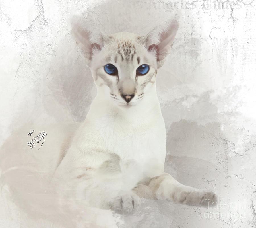Oriental Digital Art - Adorable Blue-eyed Oriental Cat  by Maria Astedt