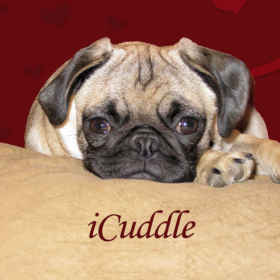 Adorable Painting - Adorable iCuddle Pug Puppy by Patricia Barmatz