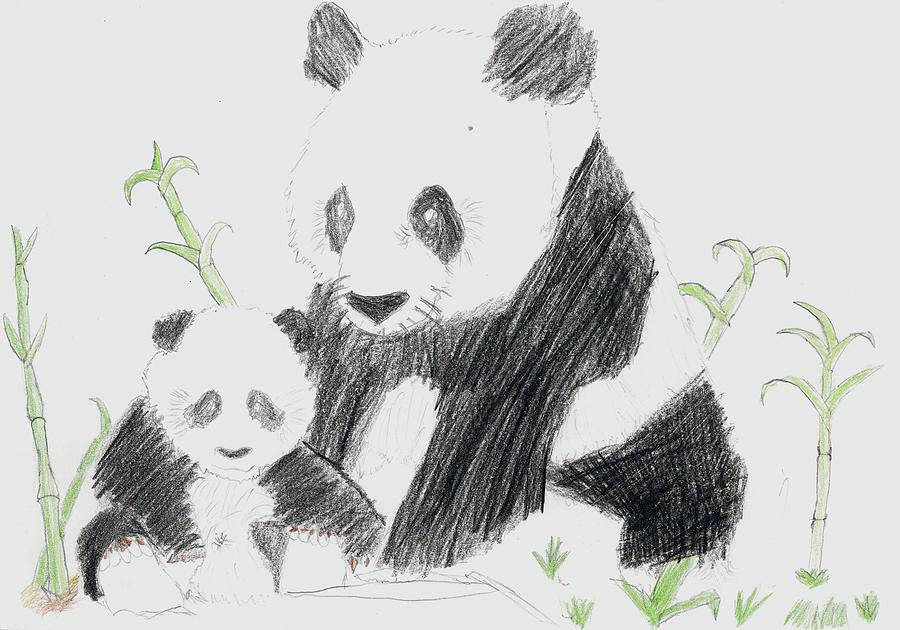 Adriana P Drawing by Adriana P