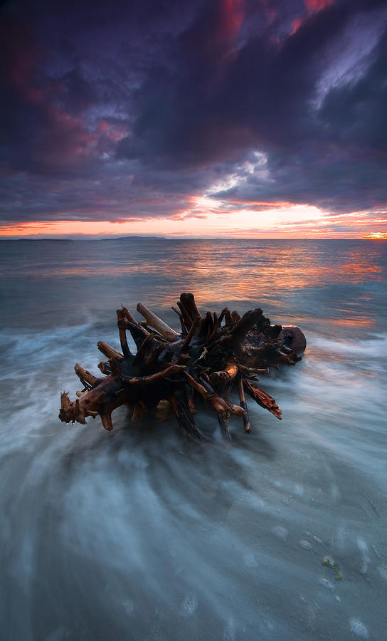 Stump Photograph - Adrift by Mike  Dawson
