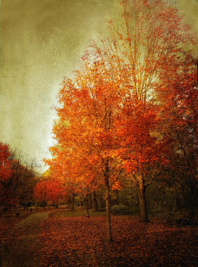 Trees Photograph - Aflame by Jessica Jenney