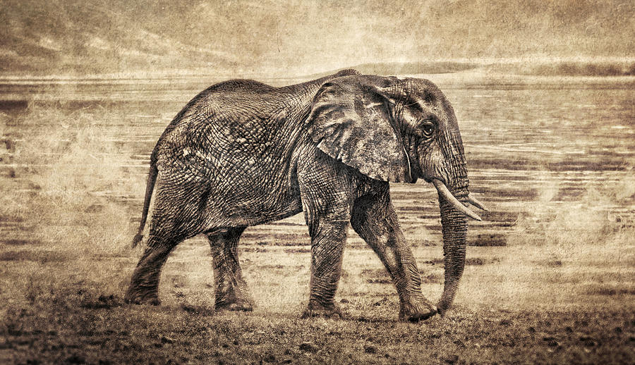 Brett Digital Art - Africa Series - Elephant by Brett Pfister