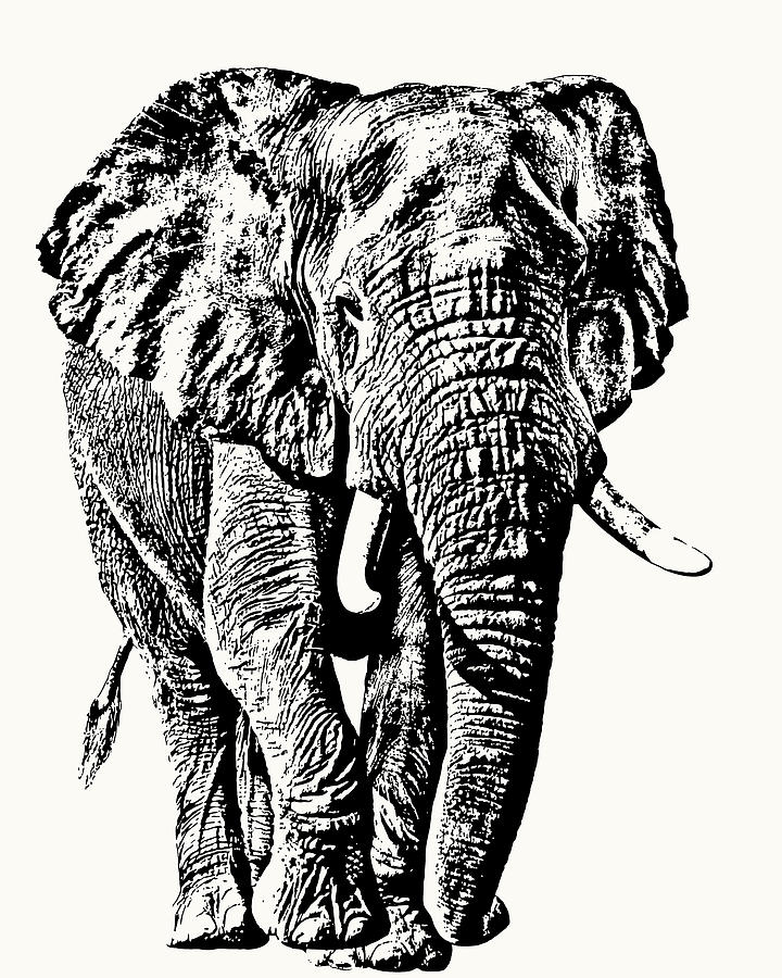 African Elephant Bull, Full Figure by Scotch Macaskill