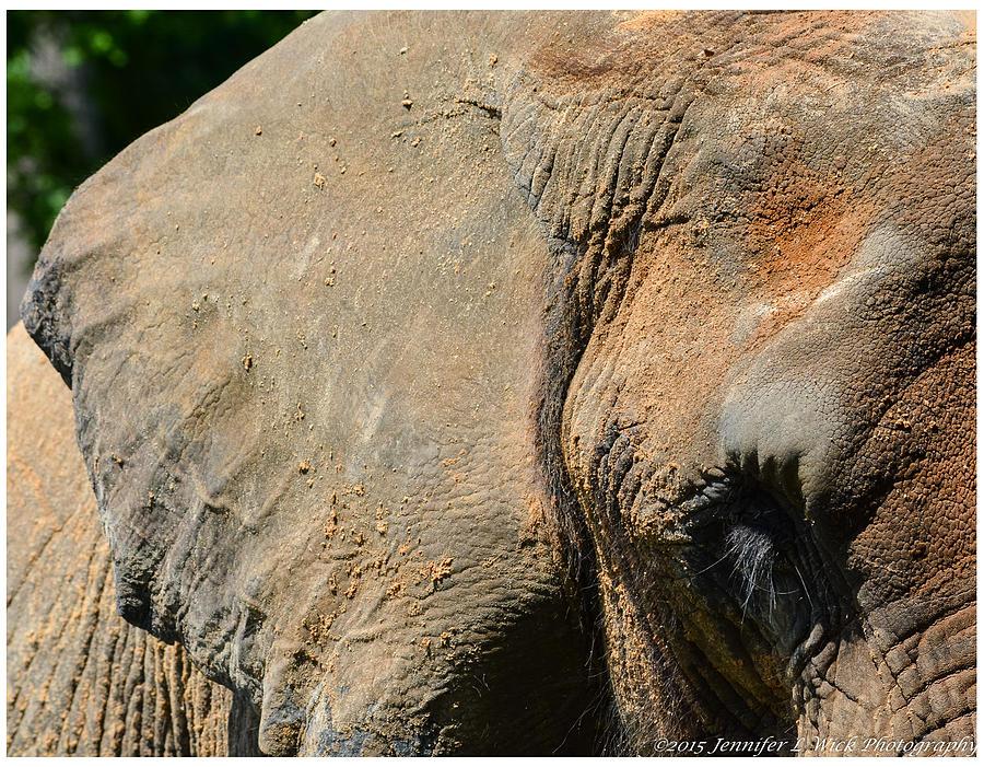 Elephant Photograph - African Elephant by Jennifer Wick