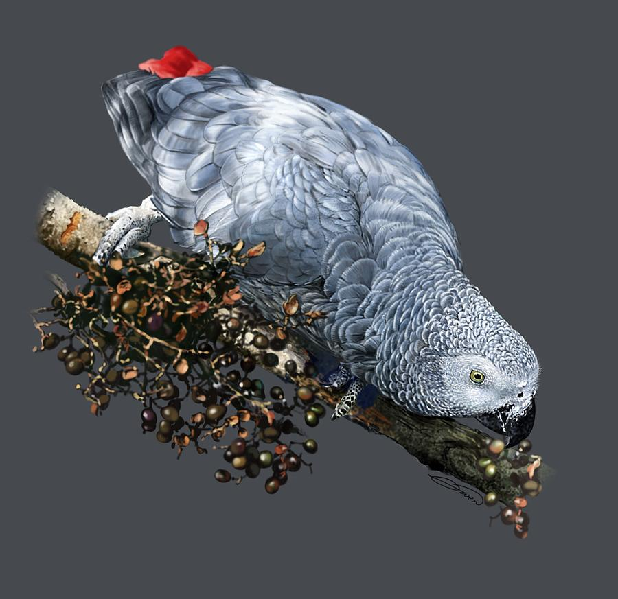 African Digital Art - African Grey Parrot A by Owen Bell