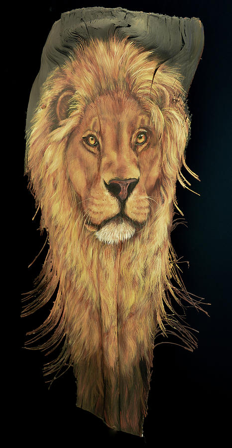 African Lion by Nancy Lauby