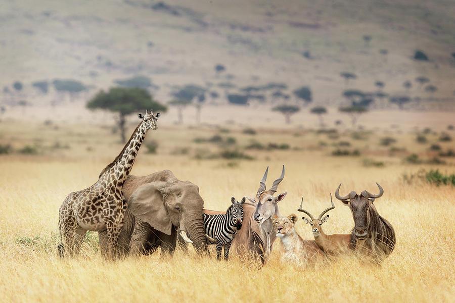 Masai Mara Photograph - African Safari Animals In Dreamy Kenya Scene by Susan Schmitz