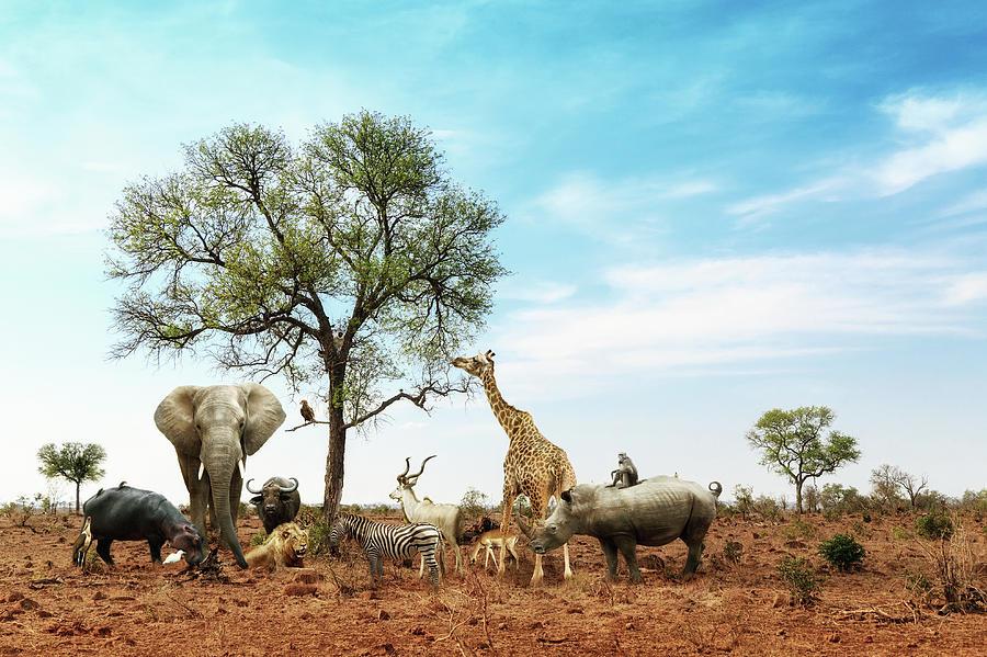 Safari Photograph - African Safari Animals Meeting Together Around Tree by Susan Schmitz