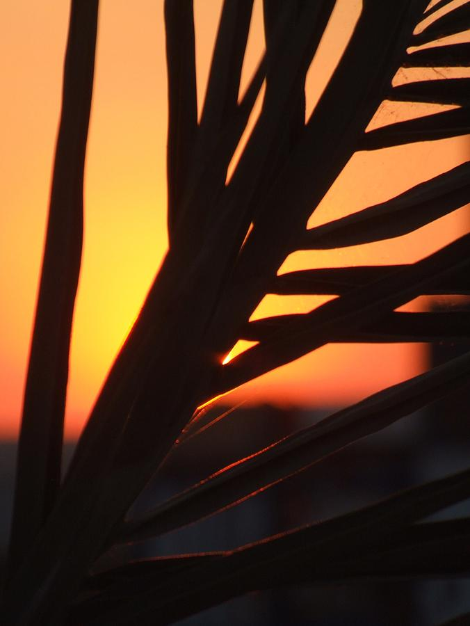 African Sunset Photograph by Bill Vernon