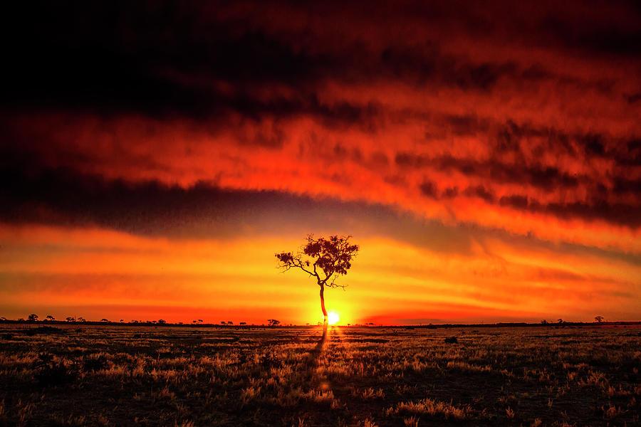 Sunset Photograph - African Sunset by Matt Cohen
