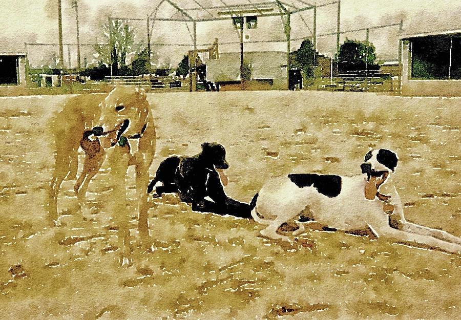 Greyhound Photograph - After A Good Run by Susan Maxwell Schmidt